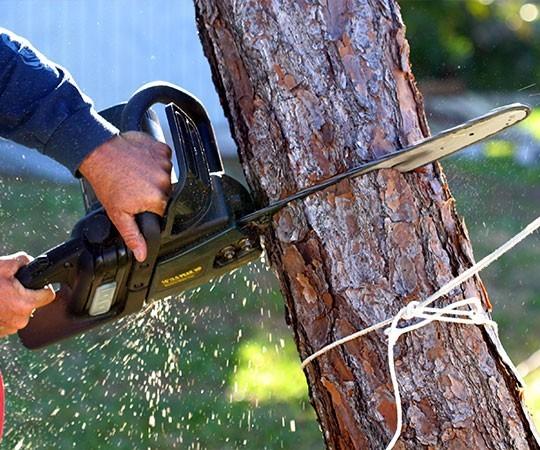Спил деревьев в Краснодаре и Краснодарском крае