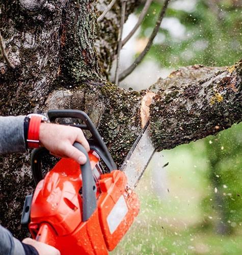 Услуга по спиливанию деревьев в Краснодаре